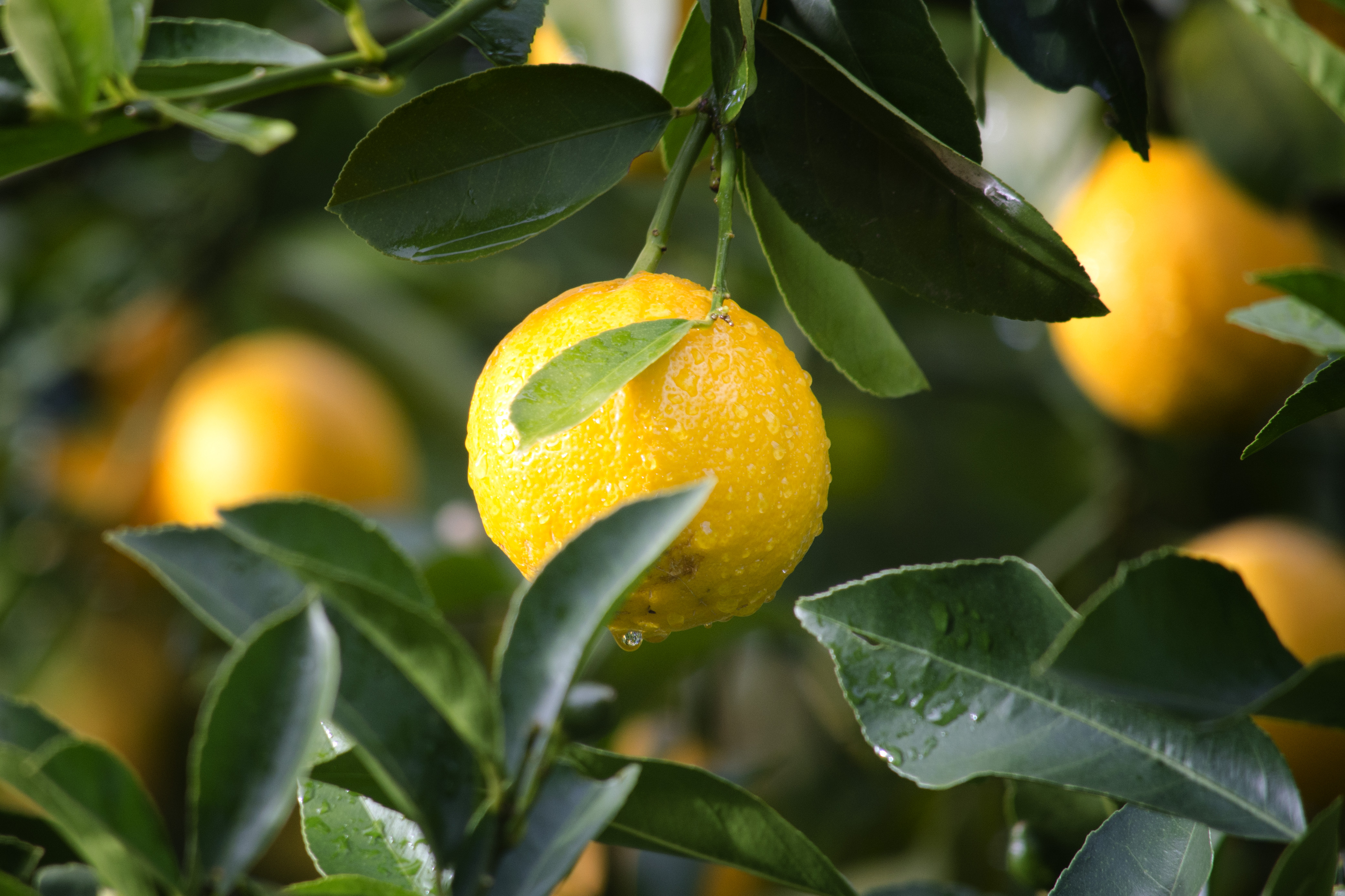 Lemon Water For Clear Skin – Here's Why